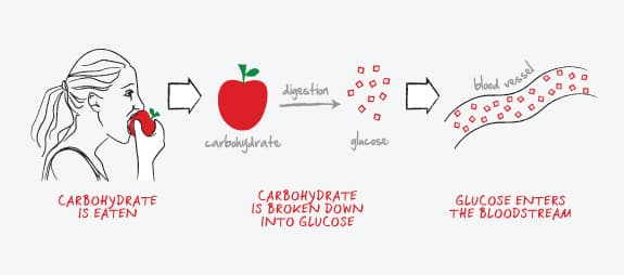 carbohydrate and glucose